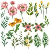 Τεράστια συλλογή των floral στοιχείων: λουλούδια, φύλλα, κλάδοι ελεύθερη απεικόνιση δικαιώματος