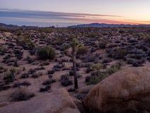 Τεράστιοι βράχοι μετά από το εθνικό πάρκο δέντρων ηλιοβασιλέματος ν Joshua στοκ εικόνα
