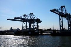 Τεράστιοι γερανοί ατσάλινων σκελετών χειρισμού εμπορευματοκιβωτίων σε ένα τερματικό εμπορευματοκιβωτίων Φορτηγό πλοίο φόρτωσης μπ στοκ εικόνες με δικαίωμα ελεύθερης χρήσης