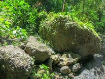 Τεράστιοι λίθοι στην τροπική άγρια βλάστηση τροπικών δασών και πολλές όμορφες εγκαταστάσεις Πράσινο χρώμα όλων των σκιών Καταπληκ στοκ εικόνες