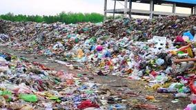 Τεράστιοι σωροί των απορριμάτων στην πετώντας περιοχή απορριμάτων με το περιπλανώμενο σκυλί που κοιτάζει γύρω απόθεμα βίντεο