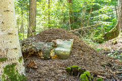 Τεράστιος λόφος μυρμηγκιών Στοκ φωτογραφία με δικαίωμα ελεύθερης χρήσης