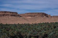 Τεράστιο άλσος φοινικών στην κοιλάδα ποταμών Ziz, Μαρόκο στοκ φωτογραφία με δικαίωμα ελεύθερης χρήσης