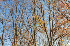 Τεράστιο δέντρο, κλάδοι έξω προς όλες τις κατευθύνσεις, μπλε ουρανός, άποψη από το β στοκ εικόνα