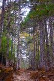 τεράστιο δέντρο Στοκ Φωτογραφίες