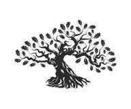 Τεράστιο και ιερό δρύινο διακριτικό λογότυπων σκιαγραφιών δέντρων που απομονώνεται στο άσπρο υπόβαθρο Στοκ εικόνες με δικαίωμα ελεύθερης χρήσης