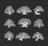 Τεράστιο και ιερό δρύινο λογότυπο σκιαγραφιών δέντρων που απομονώνεται στο σκοτεινό υπόβαθρο Στοκ φωτογραφίες με δικαίωμα ελεύθερης χρήσης