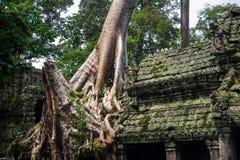 Τεράστιο παλαιό δέντρο στην καταστροφή σε Angkor Wat Στοκ εικόνα με δικαίωμα ελεύθερης χρήσης