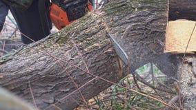 Τεράστιο πριονίζοντας αλυσιδοπρίονο δέντρων στη σε αργή κίνηση κινηματογράφηση σε πρώτο πλάνο φιλμ μικρού μήκους