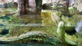 Τεράστιο φίδι στο νερό στοκ φωτογραφία με δικαίωμα ελεύθερης χρήσης