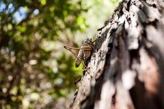 Τεράστιο grasshopper του Μαυροβουνίου Στην ακτή της αδριατικής θάλασσας Στοκ Εικόνες