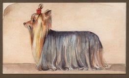 Τεριέ του Γιορκσάιρ που σύρεται στο watercolor στο σχεδιάγραμμα στοκ εικόνα με δικαίωμα ελεύθερης χρήσης