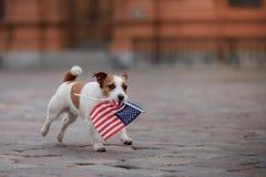 Τεριέ του Jack Russell σκυλιών στην παλαιά πόλη στοκ εικόνες