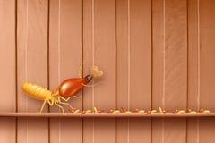 Τερμίτης, τερμίτες στον ξύλινο τοίχο, τερμίτες και ξύλινη αποσύνθεση, ξύλο σύστασης με τον τερμίτη φωλιών ή το άσπρο μυρμήγκι, ζι στοκ εικόνες