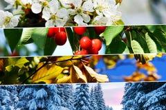Τεσσάρων εποχών κολάζ - οριζόντια εμβλήματα Στοκ εικόνα με δικαίωμα ελεύθερης χρήσης