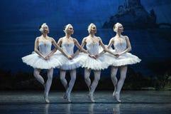 Τεσσάρων μικρός Κύκνος χορός Στοκ Φωτογραφία