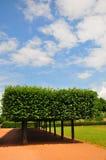 Τετραγωνικά δέντρα σε ένα ηλιόλουστο πάρκο Στοκ εικόνα με δικαίωμα ελεύθερης χρήσης