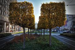 Τετραγωνικά δέντρα στην πόλη Στοκ Εικόνα