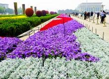 Τετραγωνικά κρεβάτια λουλουδιών Tian'anmen Στοκ Εικόνα