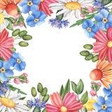 Τετραγωνικά σύνορα, πλαίσιο φιαγμένο από άγρια θερινά λουλούδια Στοκ εικόνες με δικαίωμα ελεύθερης χρήσης