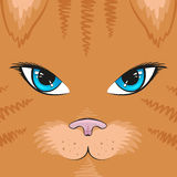 Τετραγωνική γάτα καρτών Στοκ εικόνα με δικαίωμα ελεύθερης χρήσης