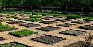 Τετραγωνική πλοκή κήπων ποδιών στοκ εικόνες