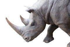 Τετραγωνικός-χειλικός ρινόκερος που απομονώνεται στο άσπρο υπόβαθρο Στοκ Εικόνα