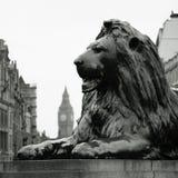 τετραγωνικός trafalgar λιονταρ&iot Στοκ Φωτογραφία