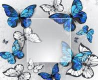 Τετραγωνικό έμβλημα με τις μπλε πεταλούδες Στοκ Εικόνα