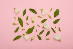 Τετραγωνικό πλαίσιο του άσπρου eustoma ρόδινο σε flatlay στοκ εικόνες με δικαίωμα ελεύθερης χρήσης