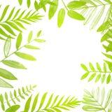 Τετραγωνικό πλαίσιο άνοιξης και καλοκαιριού με το φωτεινό πράσινο Στοκ Εικόνες