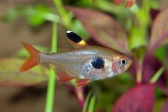 Τετρα ψάρια Στοκ Εικόνα
