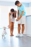 Τεχνάσματα κουταβιών Ευτυχές ζεύγος με ένα σκυλί στην κουζίνα στοκ εικόνα