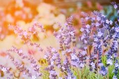 Τεχνητά λουλούδια Angelonia Στοκ Εικόνα