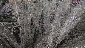 Τεχνητές διακοσμήσεις φτερών Χριστουγέννων Στοκ φωτογραφία με δικαίωμα ελεύθερης χρήσης