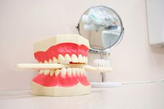 Τεχνητές σαγόνι και οδοντόβουρτσα στο οδοντικό γραφείο Στοκ Φωτογραφίες