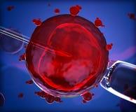Τεχνητή γονιμοποίηση Στοκ εικόνες με δικαίωμα ελεύθερης χρήσης