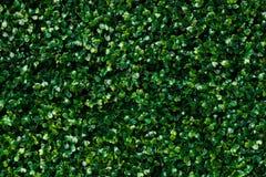 Τεχνητή πράσινη χλόη - πράσινη σύσταση υποβάθρου φύλλων Στοκ Εικόνα