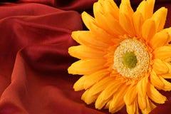 τεχνητό λουλούδι κίτρινο Στοκ εικόνα με δικαίωμα ελεύθερης χρήσης