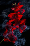 Τεχνητό λουλούδι στον καπνό στο μαύρο υπόβαθρο Στοκ Φωτογραφία