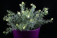 τεχνητό φυτό Στοκ Εικόνες
