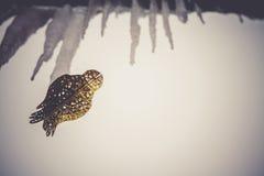 Τεχνητό χρυσό πουλί διακοσμήσεων αναδρομικό Στοκ Εικόνες