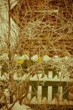 Τεχνητό χρυσό πουλί διακοσμήσεων αναδρομικό Στοκ εικόνες με δικαίωμα ελεύθερης χρήσης