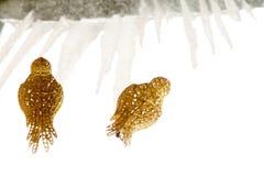 Τεχνητό χρυσό πουλί διακοσμήσεων Στοκ Φωτογραφίες