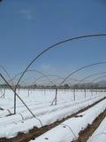 τεχνολογία strawbery πεδίων στοκ φωτογραφία με δικαίωμα ελεύθερης χρήσης