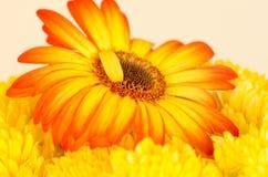 Τελειότητα στο ατελές, ηλιοβασίλεμα λουλουδιών στοκ εικόνα