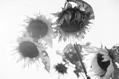 τελειώστε το καλοκαίρ&iot Στοκ φωτογραφίες με δικαίωμα ελεύθερης χρήσης