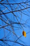 Τελευταία κίτρινη άδεια Στοκ φωτογραφία με δικαίωμα ελεύθερης χρήσης