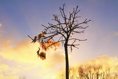 Τελευταία φύλλα Στοκ Εικόνες