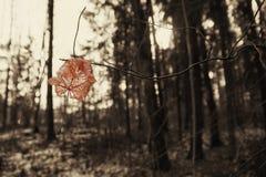 Τελευταίο φύλλο πριν από το χειμώνα Στοκ φωτογραφίες με δικαίωμα ελεύθερης χρήσης